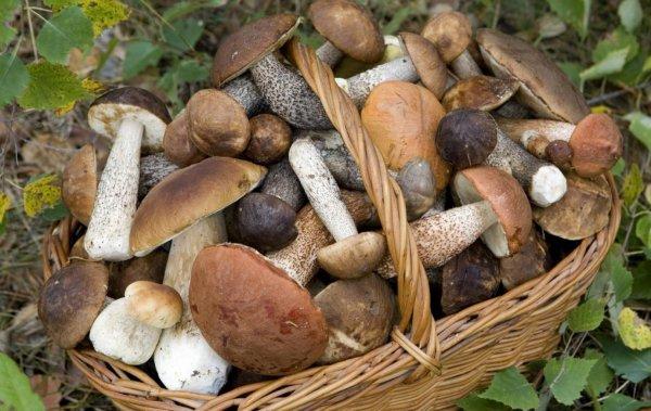 Роспотребнадзор опубликовал советы по сбору грибов