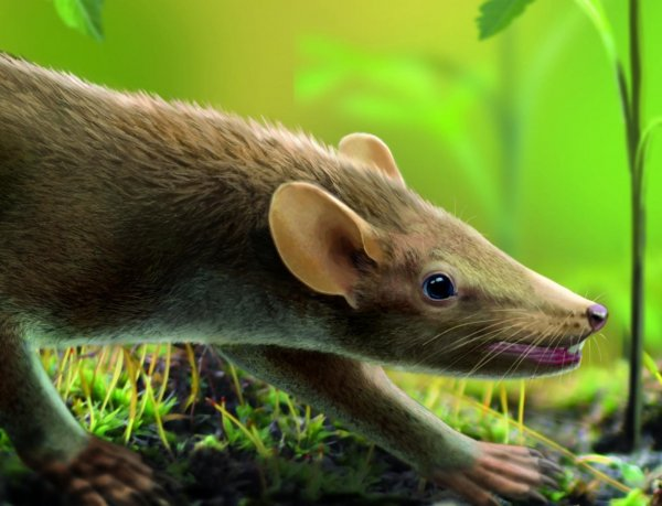 Палеонтологи нашли в Якутии челюсти млекопитающих, которые жили с динозаврами в одно время