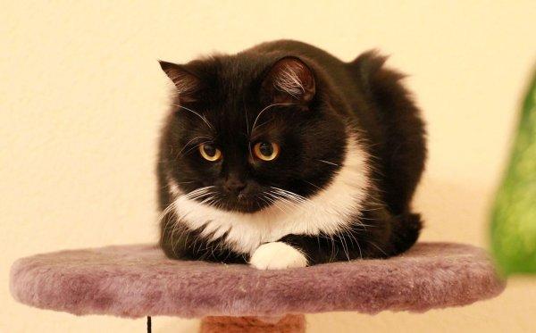 Проститутка виновата в недовольстве кота с популярной в Сети картинки