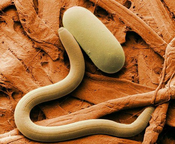 В России оживили червей, которым 42 тысячи лет