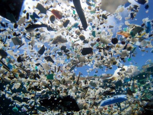 Ученые: Загрязнение человеком океана значительно влияет на жизнь морских обитателей