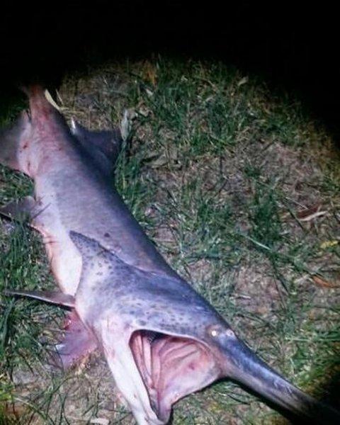 В реке Дон поймали страшную зубастую рыбу