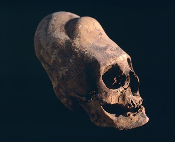 Уфологи в Испании нашли инопланетный череп