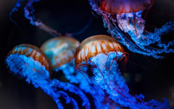 Ученые объяснили большую численность медуз в Азовском море
