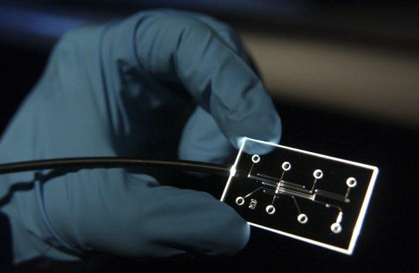 Ученые из NYUAD придумали дешевый способ создания зондов для исследования раковых клеток