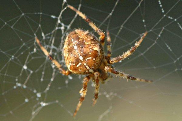Яд паука предотвращает гибель нервных клеток