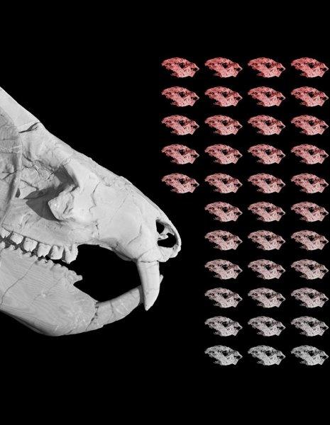 Останки яйцекладущего предка млекопитающих нашли палеонтологи