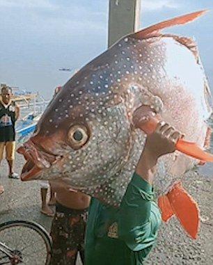 Рыбак похвастался 30-килограммовой рыбой-луной