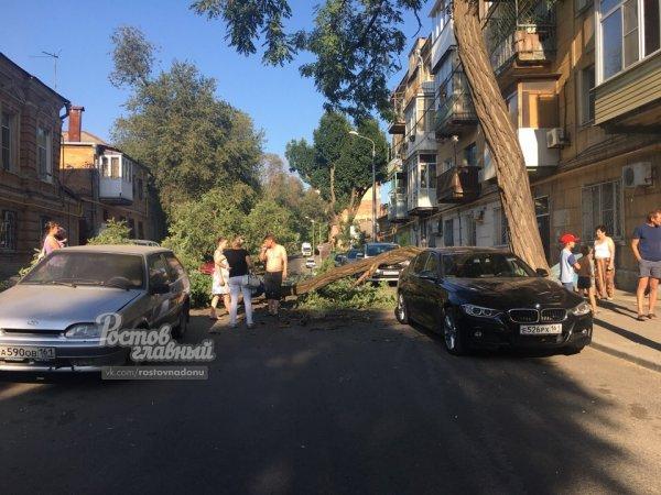 В центре Ростова упало дерево и повредило три иномарки