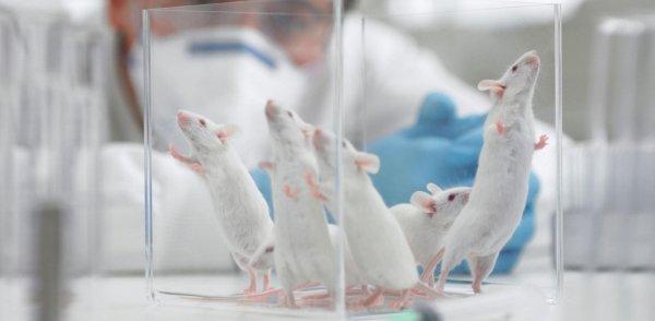 Лишение сна провоцировало развитие диабета у мышей