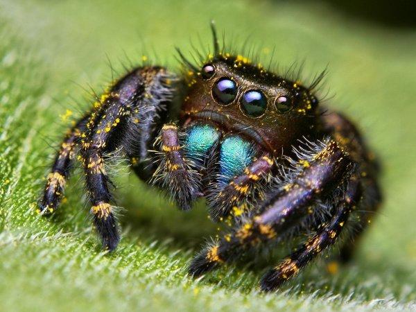 Ученые обнаружили среди пауков «авторитеты»