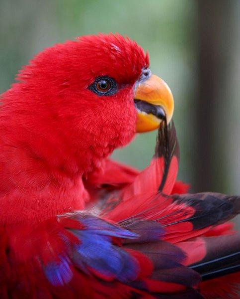 Благодаря окаменелым останкам птиц палеонтологи узнали новую информацию об эволюции пернатых