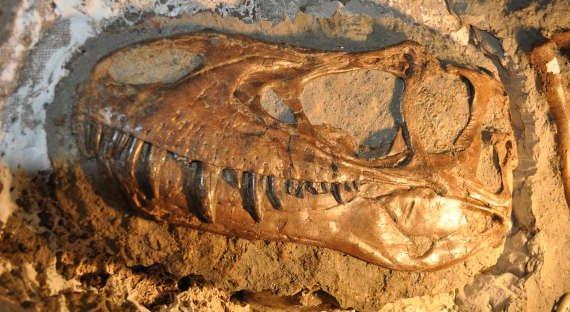 Учёные нашли следы древнейших организмов со скелетом