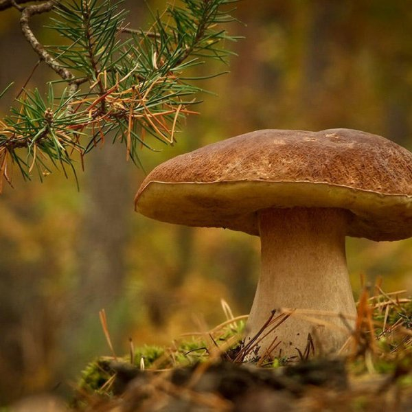 Роспотребнадзор дал рекомендации о правильном сборе грибов