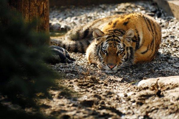 WWF: С 70-х годов XX века люди истребили 60% животных на Земле