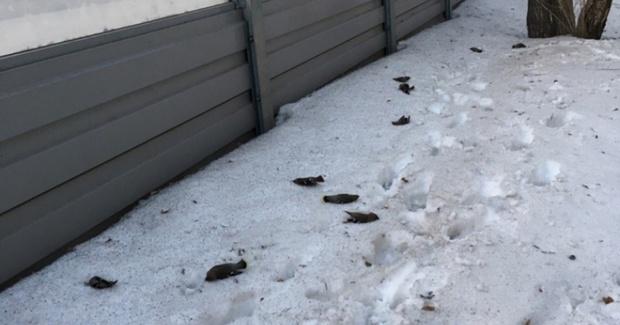Эстакады-убийцы: экологи просят наклеить на шумовые экраны силуэты хищных птиц