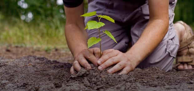 В Тюмени высадят 123 дерева