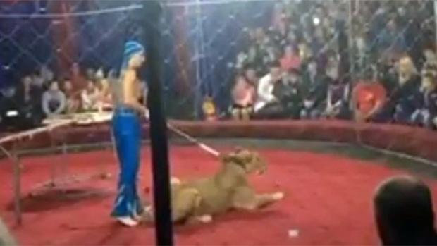 Вышла из комы 4-летняя девочка, на которую в цирке напала львица