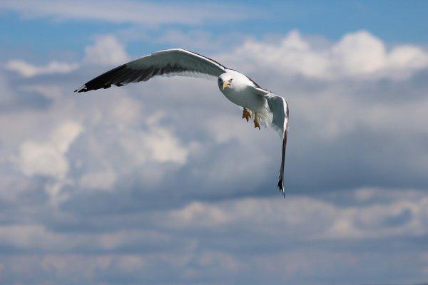 Ученые выяснили, каким образом птицы научились летать