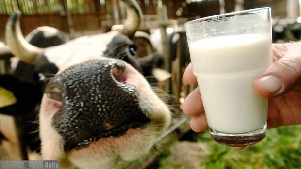 Тюменский район стал лидером по производству молока