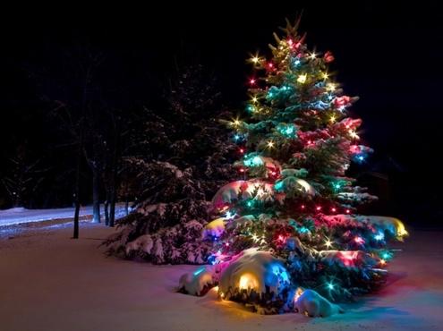 Где и когда в Тюмени купить елку, новогодние украшения и свежие продукты к праздничному столу