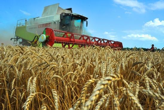 В Тюменской области продолжают развивать агропромышленное производство