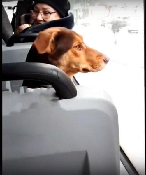 Умнее людей: В ростовской маршрутке сняли на камеру необычного пассажира