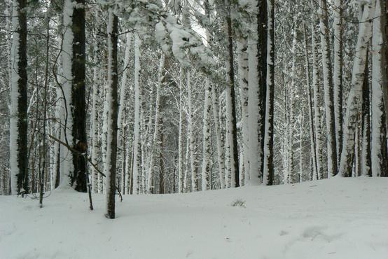 На Урале 21-летний парень заблудился в лесу и замерз насмерть