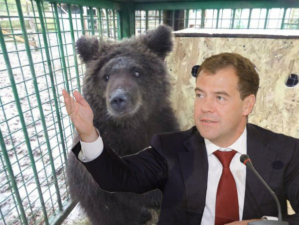 «Просыпается и ничего не понимает»: Россияне сравнили Медведева с медведицей Дашей